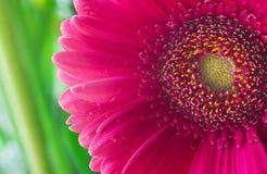 Instruction-macro rose de fleur Photos libres de droits