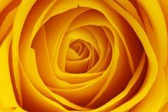 Instruction-macro rose de jaune Photographie stock libre de droits