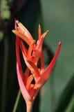 Instruction-macro tropical de fleur Image libre de droits