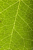 Instruction-macro vert de lame photo stock