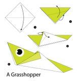 Instructions étape-par-étape comment faire à origami une sauterelle photos libres de droits