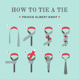 Instructions on how to tie a tie on the turquoise background of the eight steps. Prince Albert knot . Vector. Illustration Stock Photography