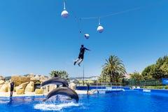 Instructor del hombre que salta con los delfínes Imagen de archivo