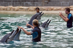 Instructor interact with Dolphin Stock Image