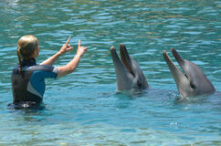 Instructor interact with Dolphin Royalty Free Stock Image
