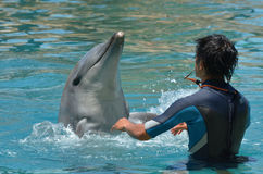 Instructor interact with Dolphin stock photos