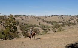 Instructor o ganadero joven del caballo que monta el animal en botas del sombrero y del jinete de vaquero imagen de archivo libre de regalías