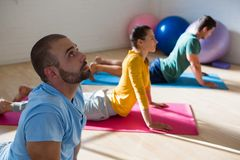 Instructor with students practicing cobra pose in studio. High angle view of instructor with students practicing cobra pose in yoga studio Royalty Free Stock Images