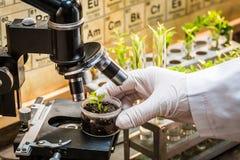 Instruisez le laboratoire pendant l'essai les pesticides sur les plantes vertes images stock