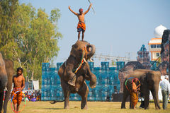 instruktör för hind ben för elefant head Royaltyfri Bild
