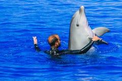 Instruktör med delfindans i vattenshow arkivbild