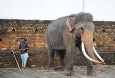 Instruktören med en elefant på stonen Royaltyfri Bild