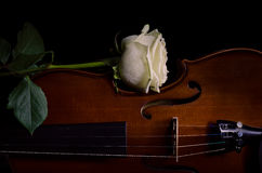 Instrumento de música del violín de la orquesta con la rosa del amarillo imagenes de archivo