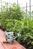 Instrumentos da lata molhando e do jardim Imagem de Stock Royalty Free