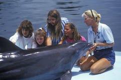 Instrutor com golfinho e turistas, teatro do mar, Islamorada, FL Imagem de Stock Royalty Free