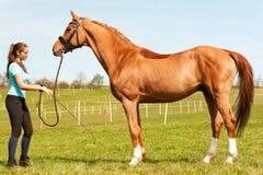 Instrutor da equitação da jovem mulher que guarda o cavalo da castanha do puro-sangue foto de stock royalty free