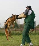 Instrutor e seu cão. Foto de Stock
