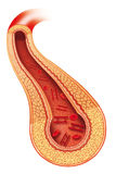 Insulin. Image of an artery in circulating insulin and the red blood cell elements Royalty Free Stock Photography