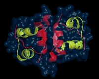 Insulin dimer. Insulin molecules assembled in a dimer. Insulin is a pancreatic hormone which is central to regulating fat and carbohydrate metabolism in the body Stock Photography