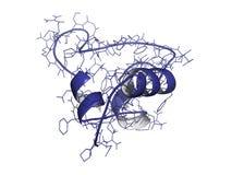 Insulin-like growth factor (IGF-1, somatomedin C). Chemical structure of a molecule of Insulin-like growth factor (IGF-1, somatomedin C) hormone. In humans, IGF Royalty Free Stock Photos