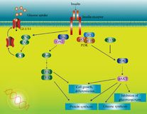 Insulin molecular pathway Stock Image