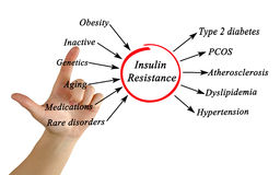 Insulin Resistance. Presentation of Insulin Resistance Diagram Stock Images