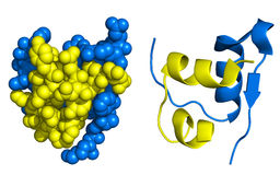 Insulin structure. Insulin monomer, comparison of ribbon and space-filling model Stock Images