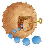 Insulina klucz Fotografia Royalty Free