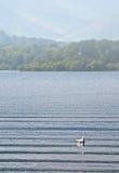 Insummer di Derwentwater del lago Fotografia Stock