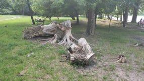 intéressant ouvre une session le parc à Kiev images stock