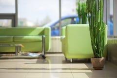 Intérieur avec deux sofas verts Photos stock