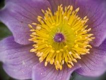 Intérieur de fleur Image libre de droits