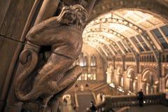 Intérieur de musée d'histoire naturelle, Londres. Images stock