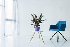 intérieur de salon dans la conception minimalistic avec le fauteuil et l'usine de lancifolia de calathea dans le pot photos stock