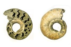 Intérieur et extérieur d'une ammonite fossilisée Photographie stock libre de droits