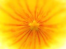Intérieur jaune de fleur photos libres de droits