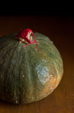 intact green pumpkin with stem covered with red wax Royalty Free Stock Images