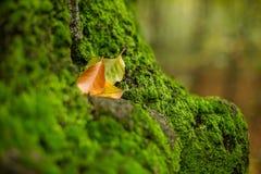 Intacte mos en de herfstbladeren Royalty-vrije Stock Foto's