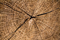 Intaglio in legno Fotografia Stock Libera da Diritti