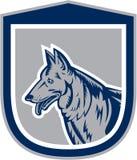 Intaglio in legno di Dog Head Shield del pastore tedesco Immagine Stock Libera da Diritti