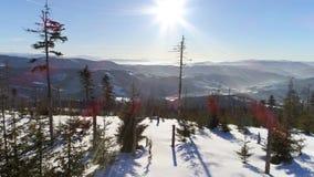 Intakt antenn 4k för snöträdvinter stock video