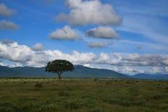 Intakt natur, ett träd, ett berg och blå himmel afrikansk savanna arkivbild