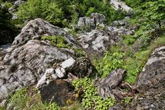 Intakt natur under Mount Olympus, Grekland arkivbild