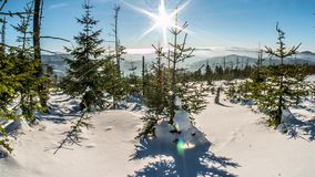 Intakt vinterträdpanorama Timelapse 4k arkivfilmer