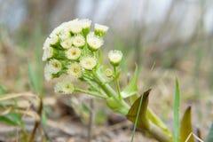 Inte en vanlig blomma planterar Zsolt skönhet av naturen Arkivfoton