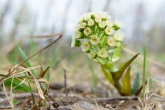 Inte en vanlig blomma planterar Zsolt skönhet av naturen Royaltyfria Bilder