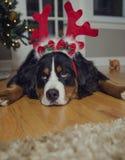Inte så upphetsat om jul Royaltyfri Fotografi
