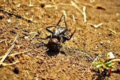 Dead insect basking in the sun on its back. An integer dead back lying on its back in the summer sun with a closeup of dirt, vegetation and dried plants Stock Photo