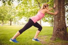 Integrale della donna che si esercita con l'allungamento del corpo dall'albero Immagini Stock Libere da Diritti