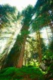 Integrerat i landskapet, för ditt innehåll Sagaskog, berglandskap arkivbilder